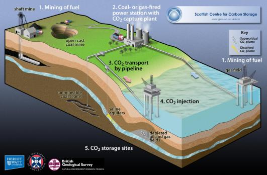 The whole carbon cycle including CCS