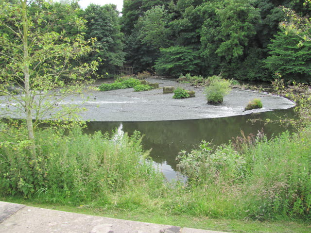 Long, wide weir in high Summer